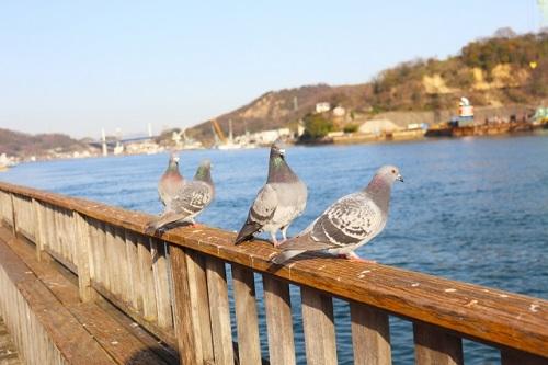 カラスと鳩の戦争がマンション公園内で勃発!カラスも鳩も鳥獣保護法の対象