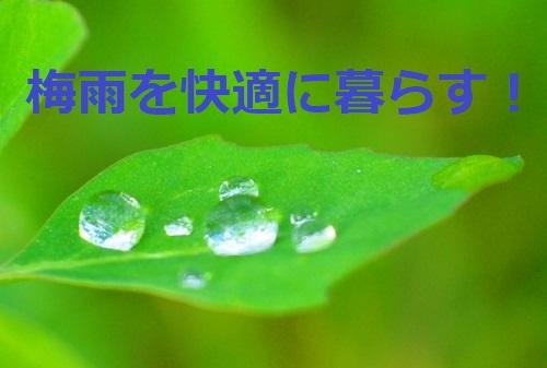 【梅雨は恵の雨】人にも植物にも必要な水を作る!快適に過ごす方法を見つける